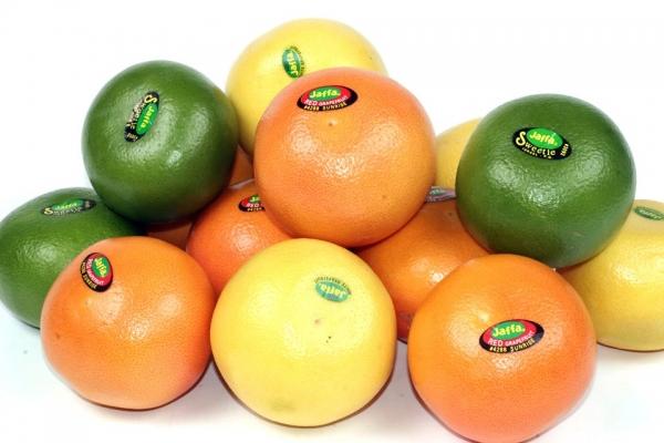 grapefruitsortiment.jpg