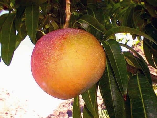 aya_on_tree.jpg