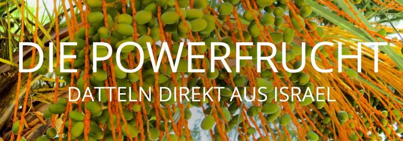 media/image/dattelwelt.jpg
