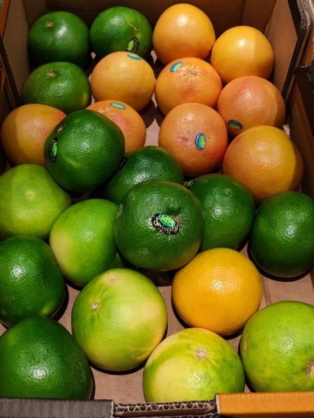 Grapefruit_Sweetie_Mix.jpg